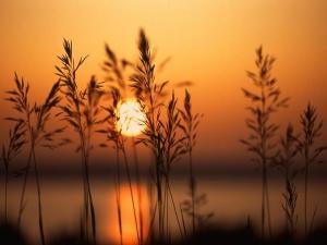a-setting-sun-1024x768 (1)