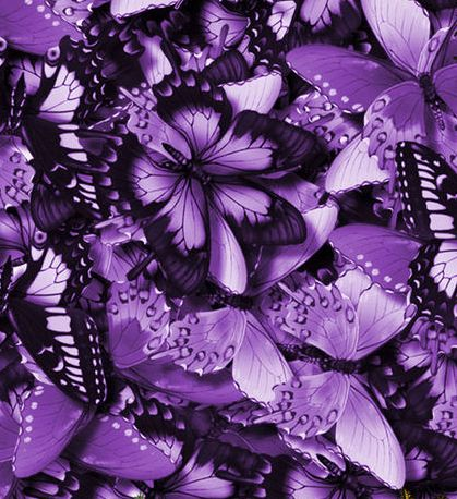 Butterflies-Bunches-Colorful-Violet