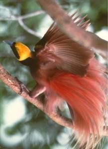 Pasărea Paradisului :(