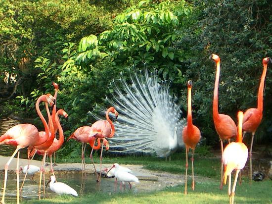 В Липецке пройдет конкурс красоты среди птиц